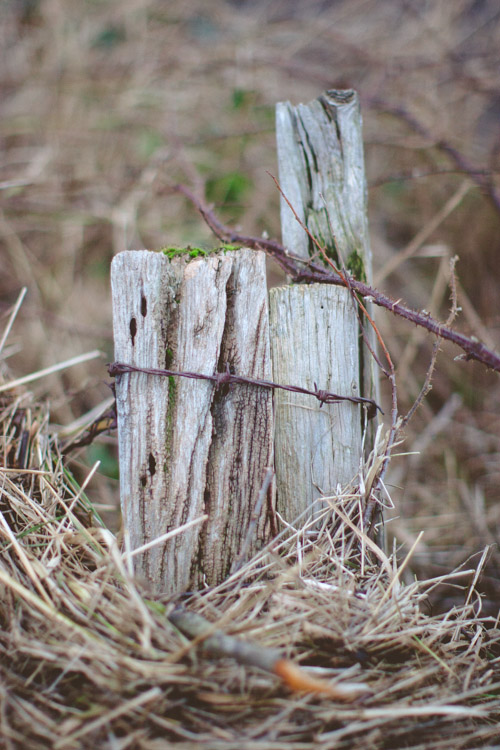 Muted tones of weathered wood and