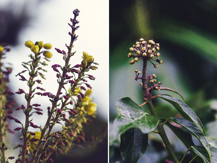 Flowering winter buds