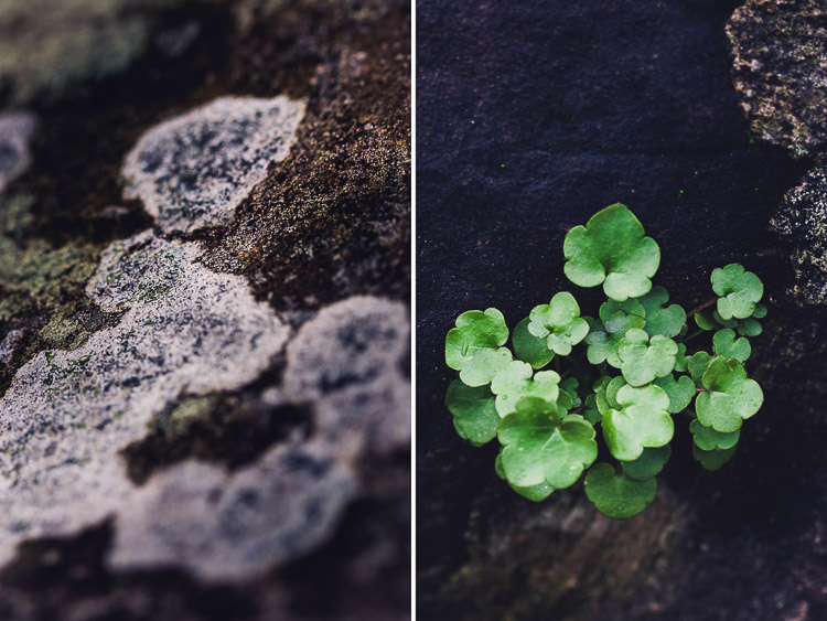 Contrast between the plants and the stone