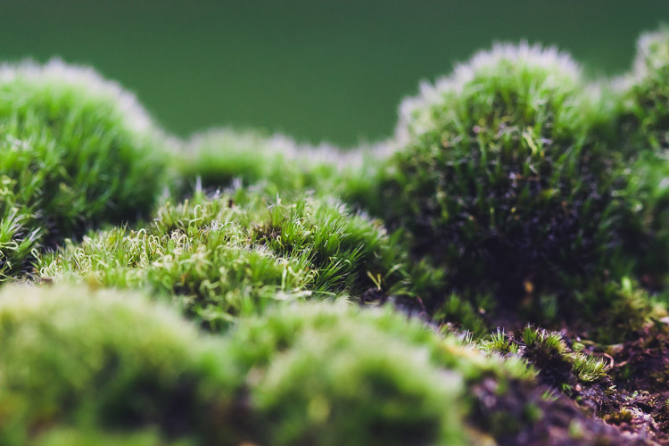 Close-up of the moss ground on the stone wall