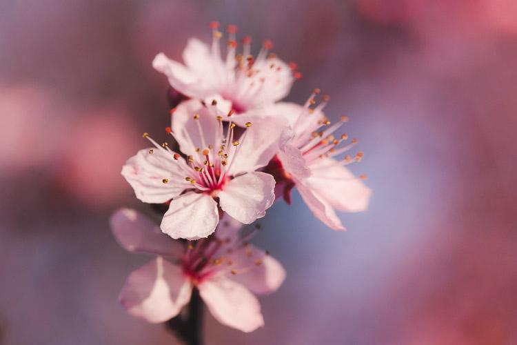 Spring blossoms taken with macro lense