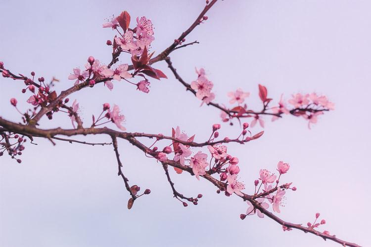 Pastel blossom flurry