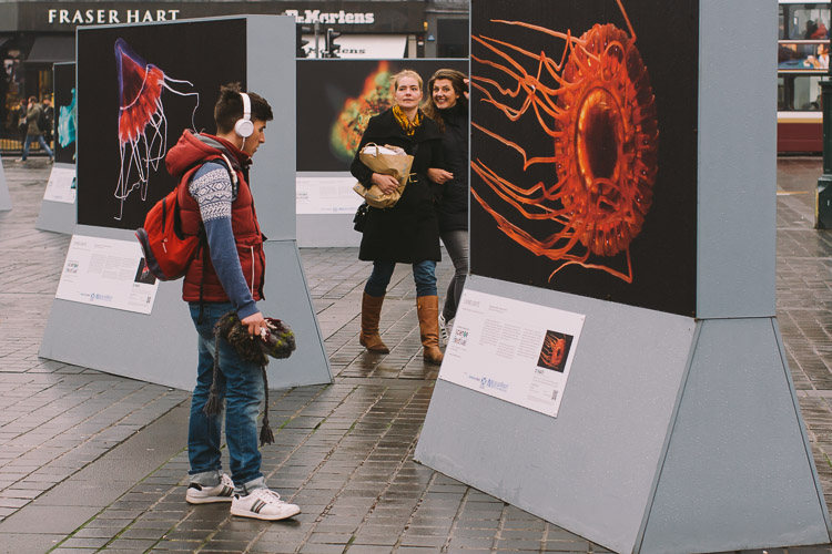 Tourists and passers-by enjoying the Living Lights exhibition