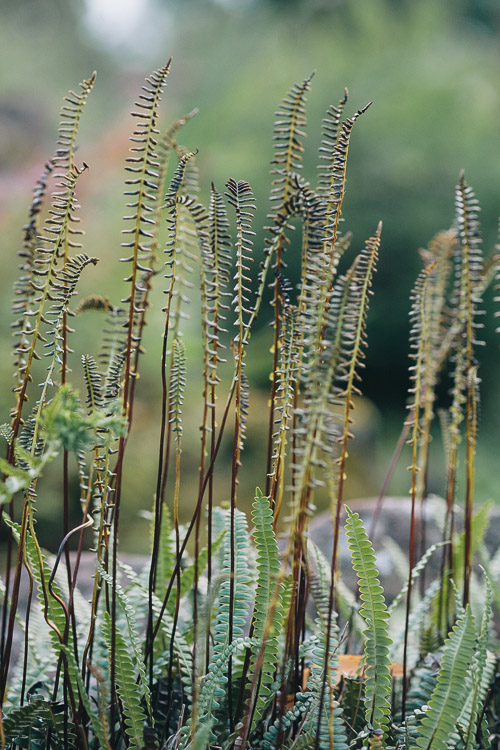 Slim stems of ferns near the water feature