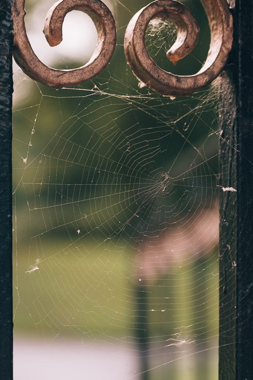 Spiderweb on the gates of Castledyke's Park - the  number of spiders this September is amazing