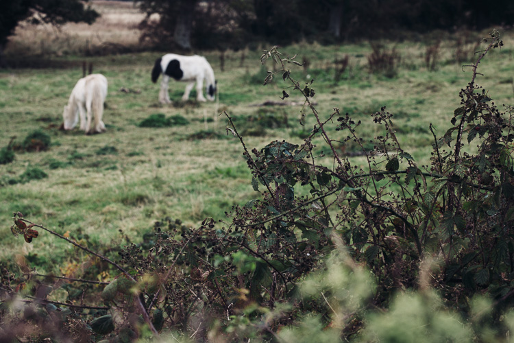 Trying to photograph this pair through the hedge