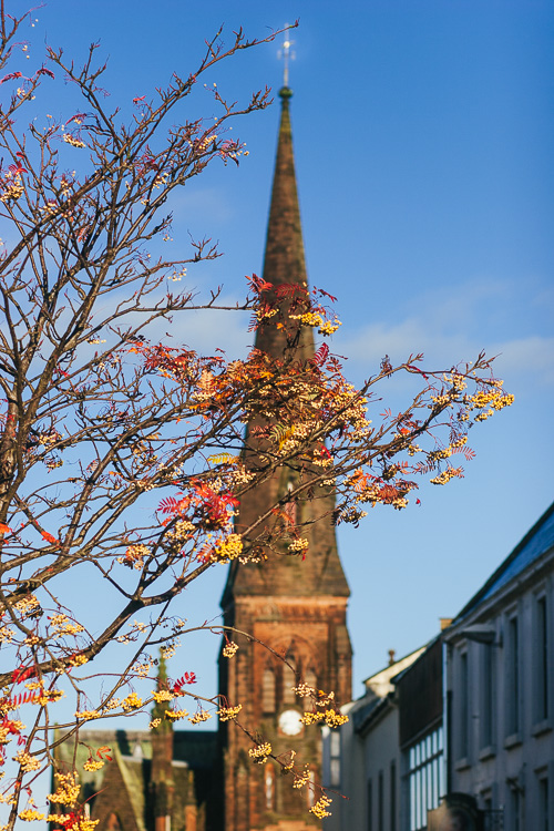 'Autumn Spire' rowan tree against the spire of Greyfriars Kirk in Dumfries town centre