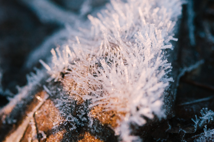 Spikey frosting grows up like fur tree needles