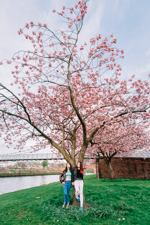 Two girls standing under the flowering cherry tree