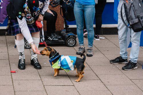Dog the Scots patriot