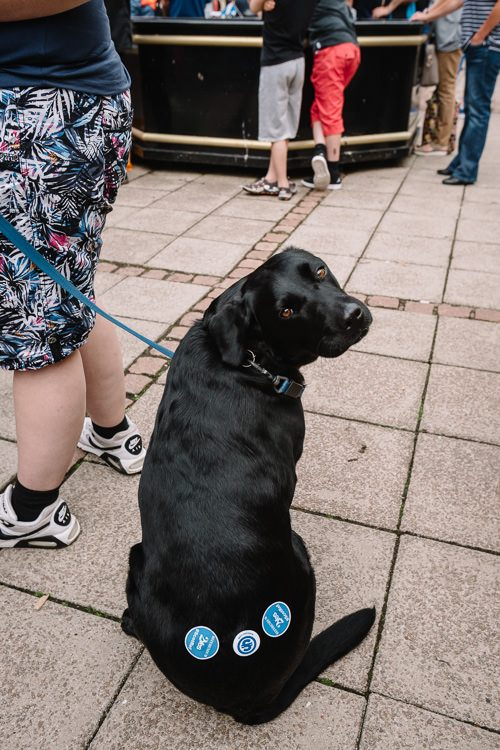 Activist's dog has Scottish referendum stickers on its bum
