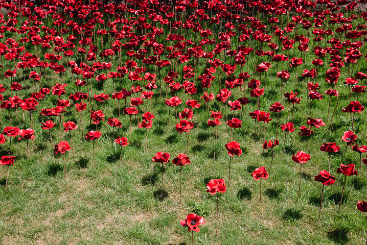 Individual poppies on metal spikes in the grass on the lower part of Weeping Window