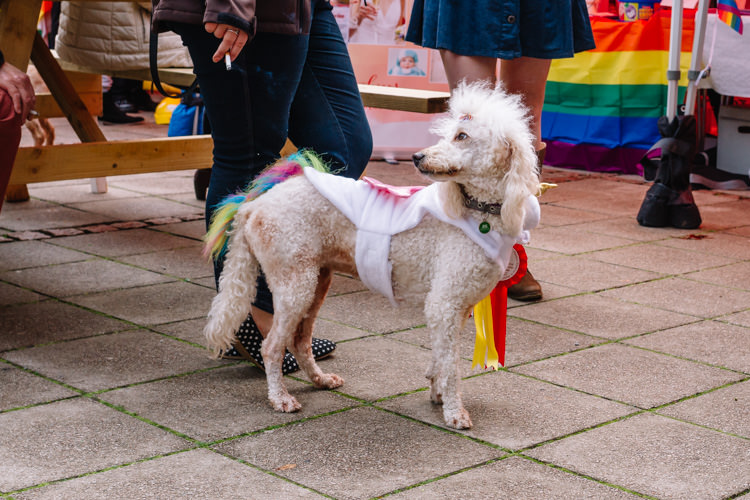 Overall Pride Pooch winner