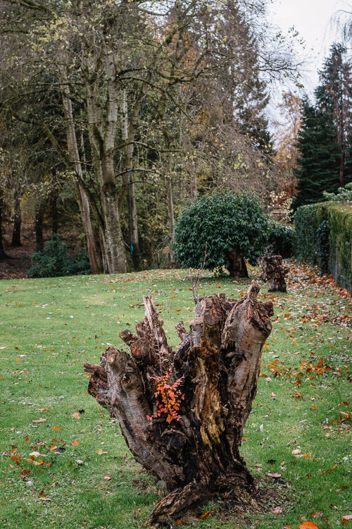 Heart-shaped tree stump at Dumfries High Cemetery seemed symbolic of the WW1 end centenary and the poignant war history