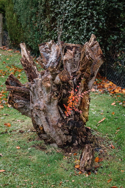 Heart-shaped dead tree stump with a live sprig boasting red leaves
