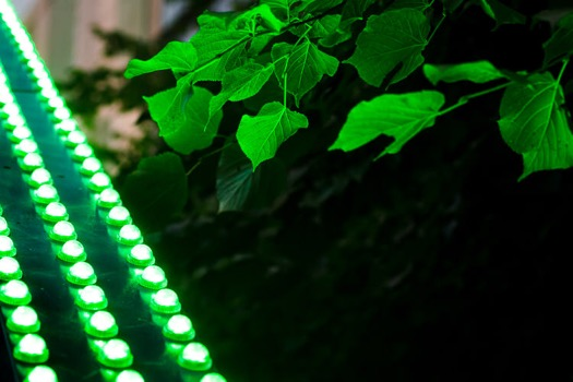 LED lights adding colour to the nearby foliage