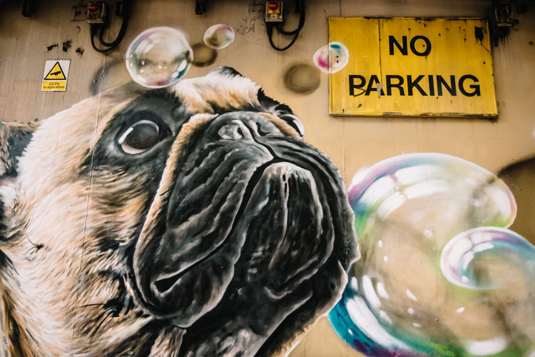 Detail of the French bulldog's face surrounded by bubbles in Rogue One's Bubbles mural