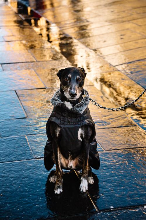 Dog sitting on the wet pavement
